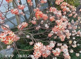 f:id:mikawakinta63:20170221181348j:image:right