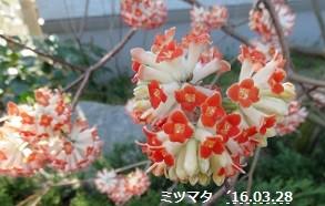 f:id:mikawakinta63:20170221181517j:image:left