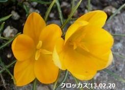 f:id:mikawakinta63:20170226155450j:image:right
