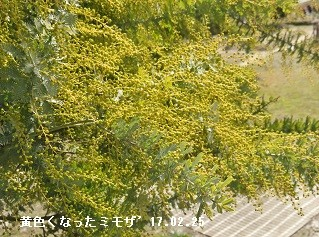 f:id:mikawakinta63:20170228135922j:image:left