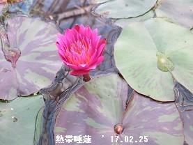 f:id:mikawakinta63:20170228210255j:image:left