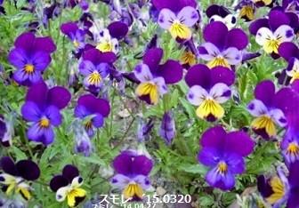 f:id:mikawakinta63:20170303180822j:image:left