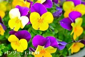 f:id:mikawakinta63:20170308132249j:image:left
