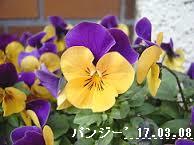 f:id:mikawakinta63:20170308153018p:image:left