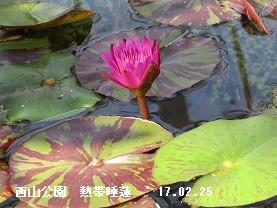 f:id:mikawakinta63:20170309145319j:image:right
