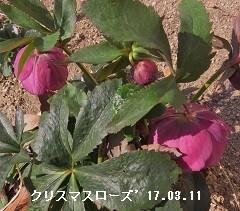 f:id:mikawakinta63:20170310210956j:image:right