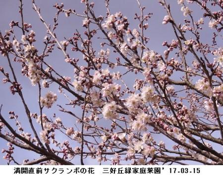 f:id:mikawakinta63:20170315140350j:image
