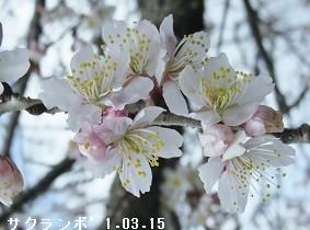 f:id:mikawakinta63:20170315172231j:image:right