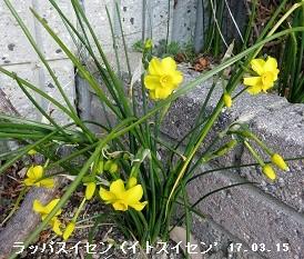 f:id:mikawakinta63:20170315173249j:image:left