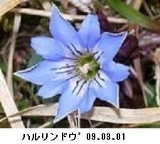 f:id:mikawakinta63:20170316123317j:image:right