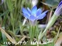f:id:mikawakinta63:20170316200537j:image:left