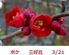 f:id:mikawakinta63:20170317123754j:image:left