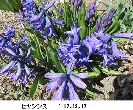 f:id:mikawakinta63:20170320163028j:image:right