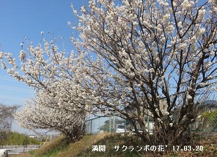 f:id:mikawakinta63:20170321141742j:image