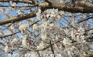 f:id:mikawakinta63:20170321193055j:image:right