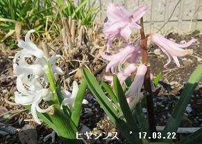 f:id:mikawakinta63:20170322150527j:image:right
