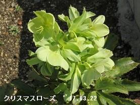 f:id:mikawakinta63:20170322151928j:image:left