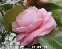 f:id:mikawakinta63:20170324155111j:image:right