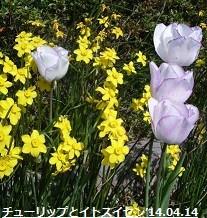 f:id:mikawakinta63:20170327143605j:image:right
