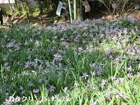 f:id:mikawakinta63:20170329130233j:image:right