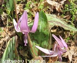 f:id:mikawakinta63:20170329171315j:image:left