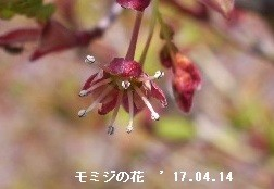 f:id:mikawakinta63:20170414215531j:image:right