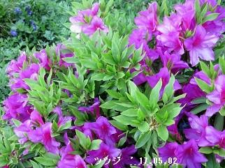 f:id:mikawakinta63:20170502210753j:image:right