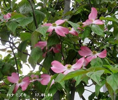 f:id:mikawakinta63:20170503220716j:image