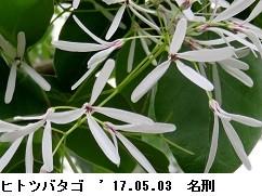 f:id:mikawakinta63:20170504144534j:image:right