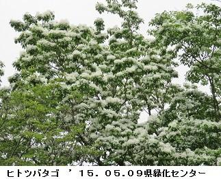 f:id:mikawakinta63:20170504150948j:image:left