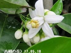 f:id:mikawakinta63:20170510142713j:image:left