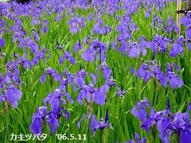 f:id:mikawakinta63:20170511134342j:image:left