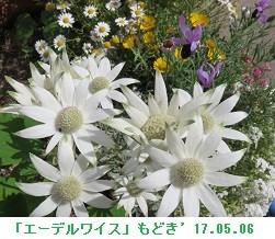 f:id:mikawakinta63:20170512131854j:image:right