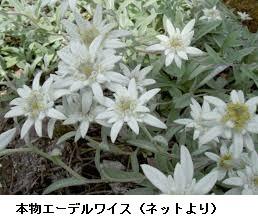 f:id:mikawakinta63:20170512135531j:image:left