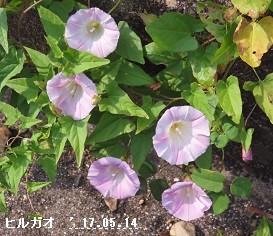 f:id:mikawakinta63:20170514205229j:image:left