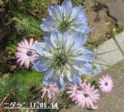 f:id:mikawakinta63:20170515140748j:image:left