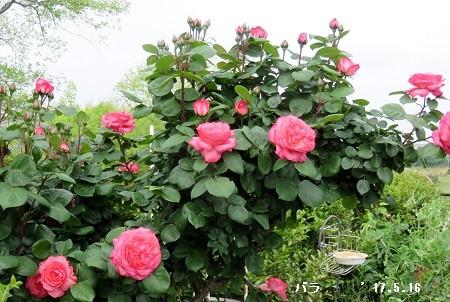 f:id:mikawakinta63:20170516133357j:image