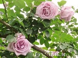 f:id:mikawakinta63:20170516142624j:image:right