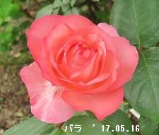 f:id:mikawakinta63:20170516154904j:image:left
