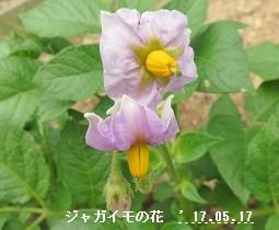 f:id:mikawakinta63:20170517134917j:image:right