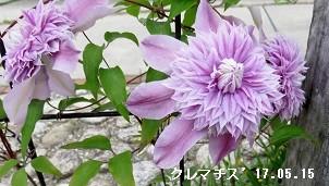 f:id:mikawakinta63:20170517143556j:image:left