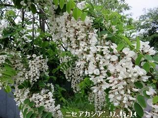 f:id:mikawakinta63:20170517155731j:image:right