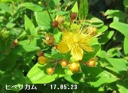 f:id:mikawakinta63:20170525134052j:image:right
