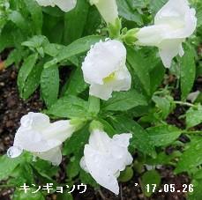 f:id:mikawakinta63:20170526140312j:image:left