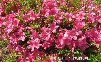 f:id:mikawakinta63:20170527143644j:image:left