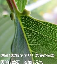 f:id:mikawakinta63:20170527153028j:image:right