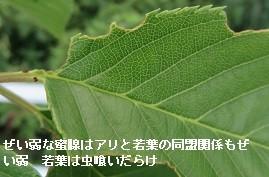 f:id:mikawakinta63:20170527153157j:image:left