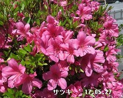 f:id:mikawakinta63:20170527174839j:image:right