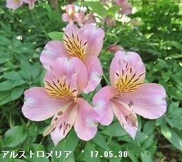 f:id:mikawakinta63:20170530132525j:image:left