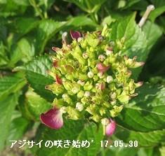f:id:mikawakinta63:20170530133941j:image:right